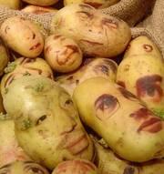 куплю Сумы  картофель